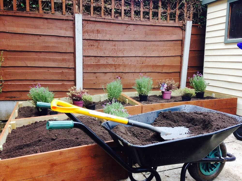 A wheel barrow with soil filling raised beds