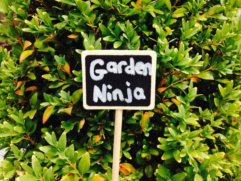 A Garden Ninja sign in front of clipped box