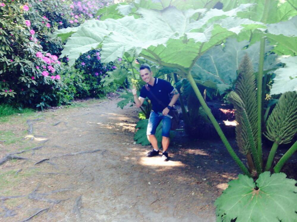 Garden Ninja hiding under a Gunnera plant