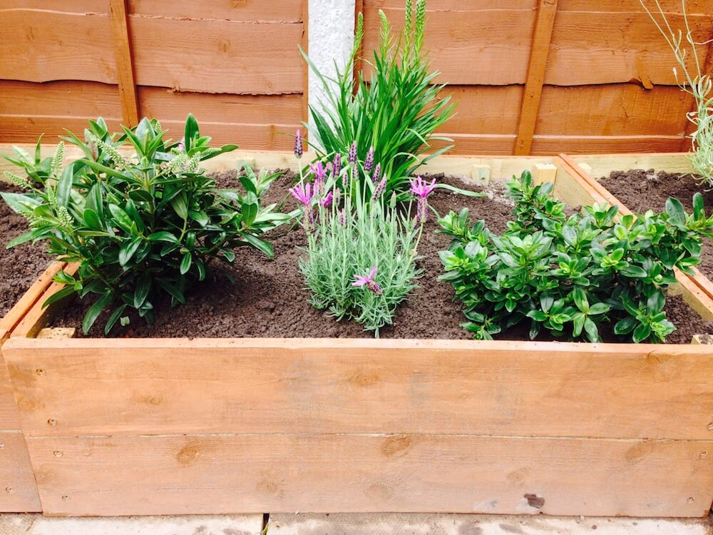 The Ultimate Guide To Raised Beds Garden Ninja Ltd