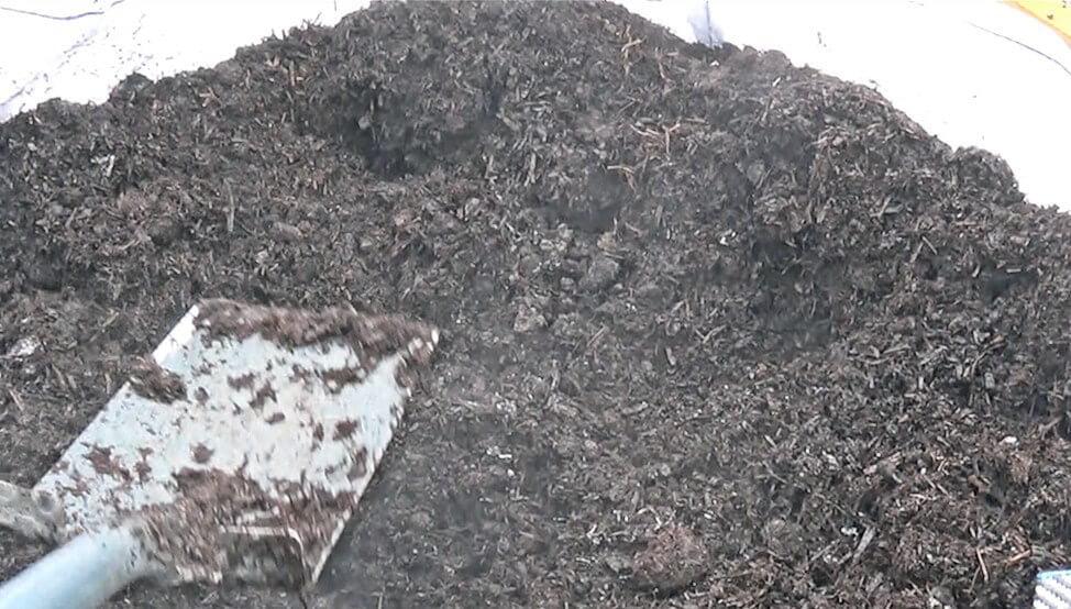 Organic turf improver
