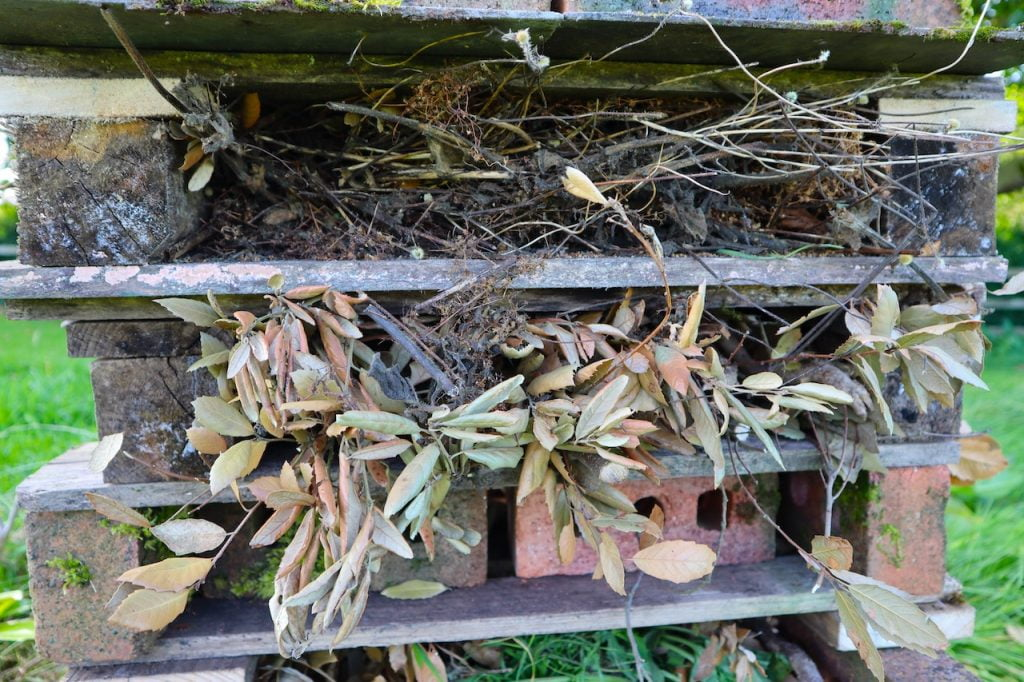 Herbaceous material for an insect hotel