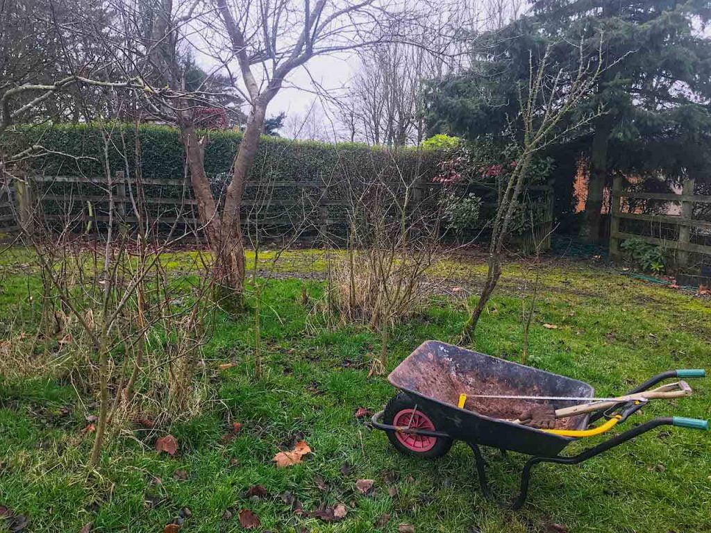 January garden tour wheelbarrow and trees