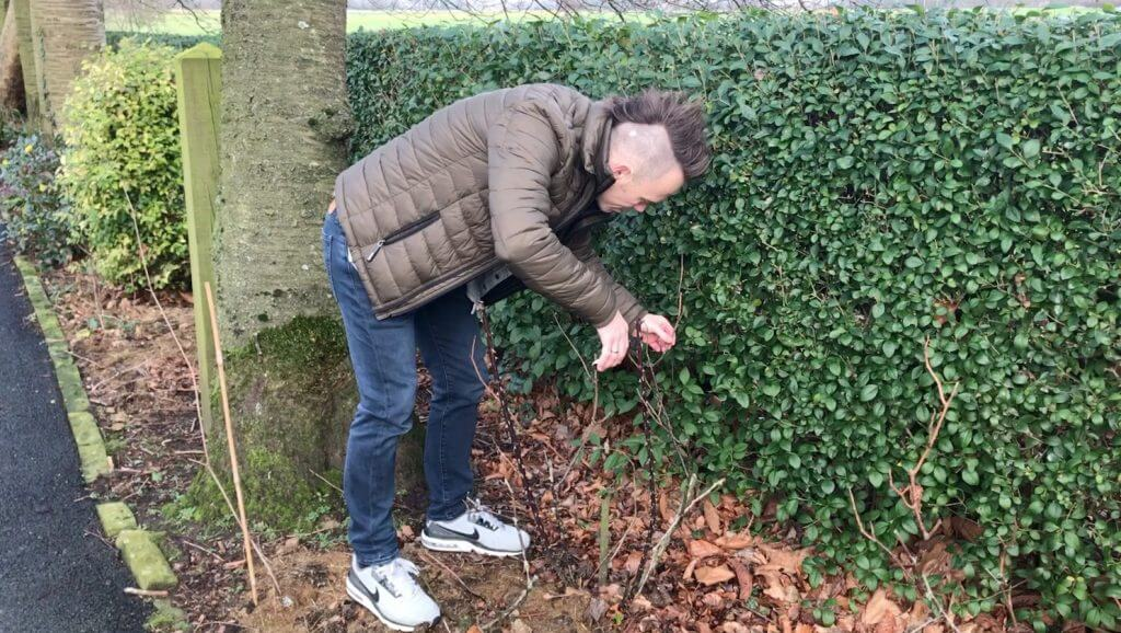 Garden Blogger Lee Burkhill pruning roses