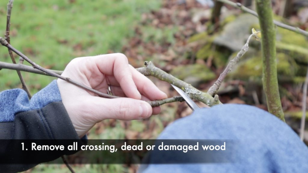 Removing damaged wood from a tree pruning