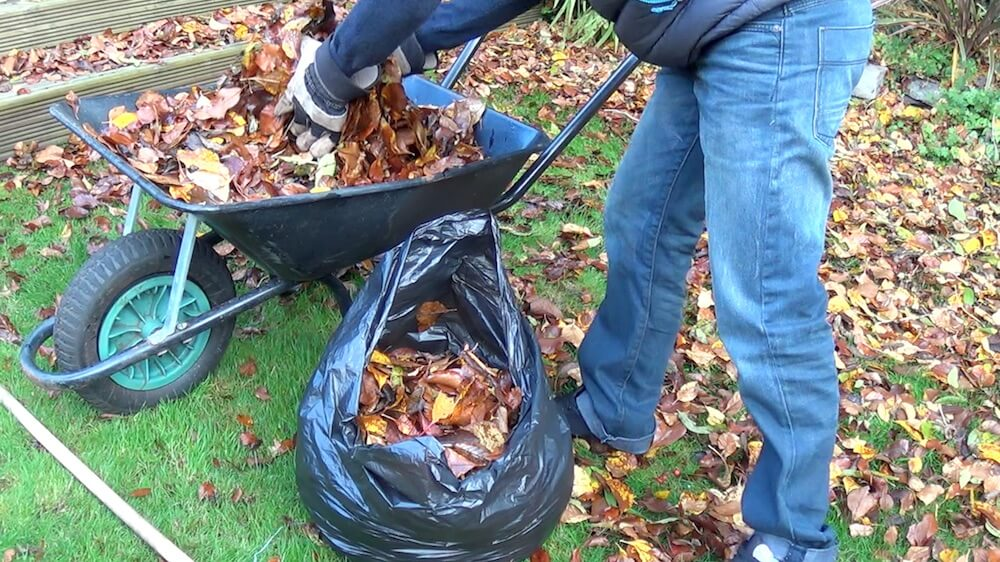 Garden Ninja putting leaves in a bag to make leaf mold