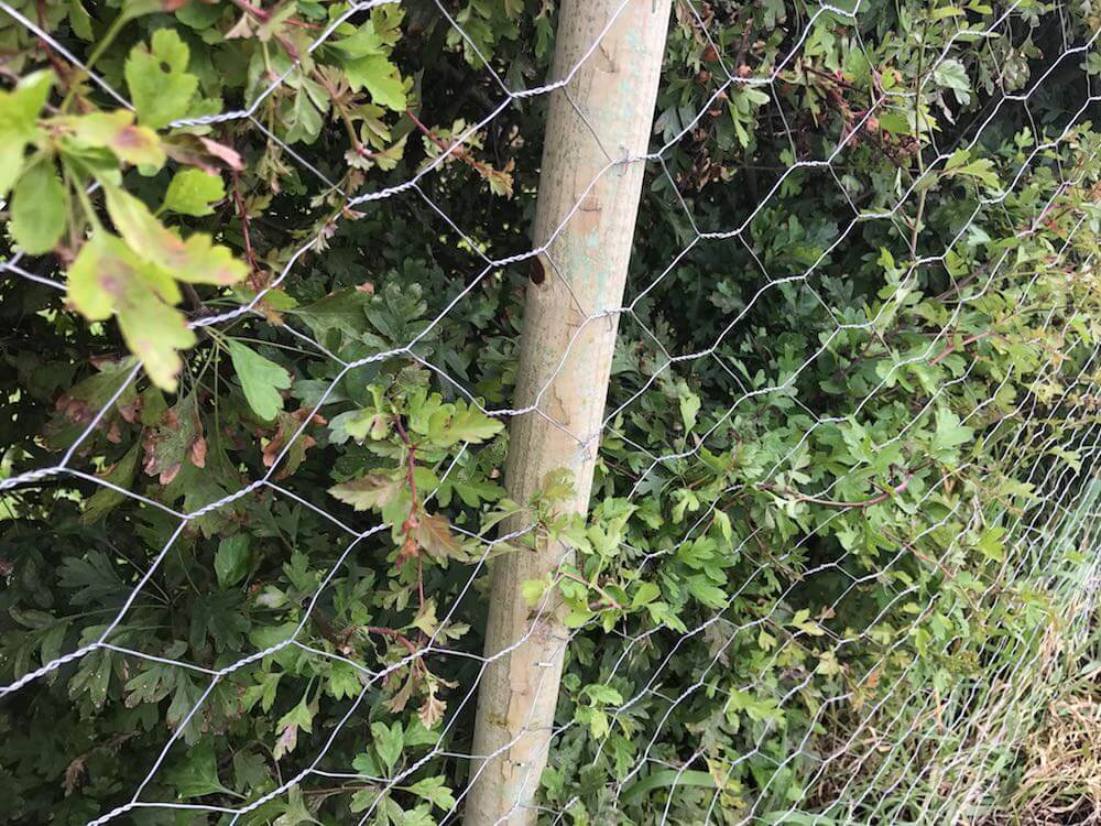 A dog proof fence and hedge