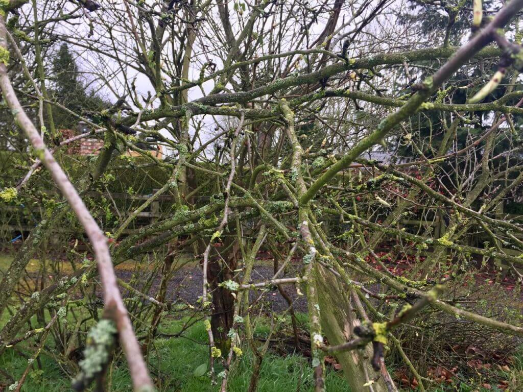 A tangled mess of branches that need pruning
