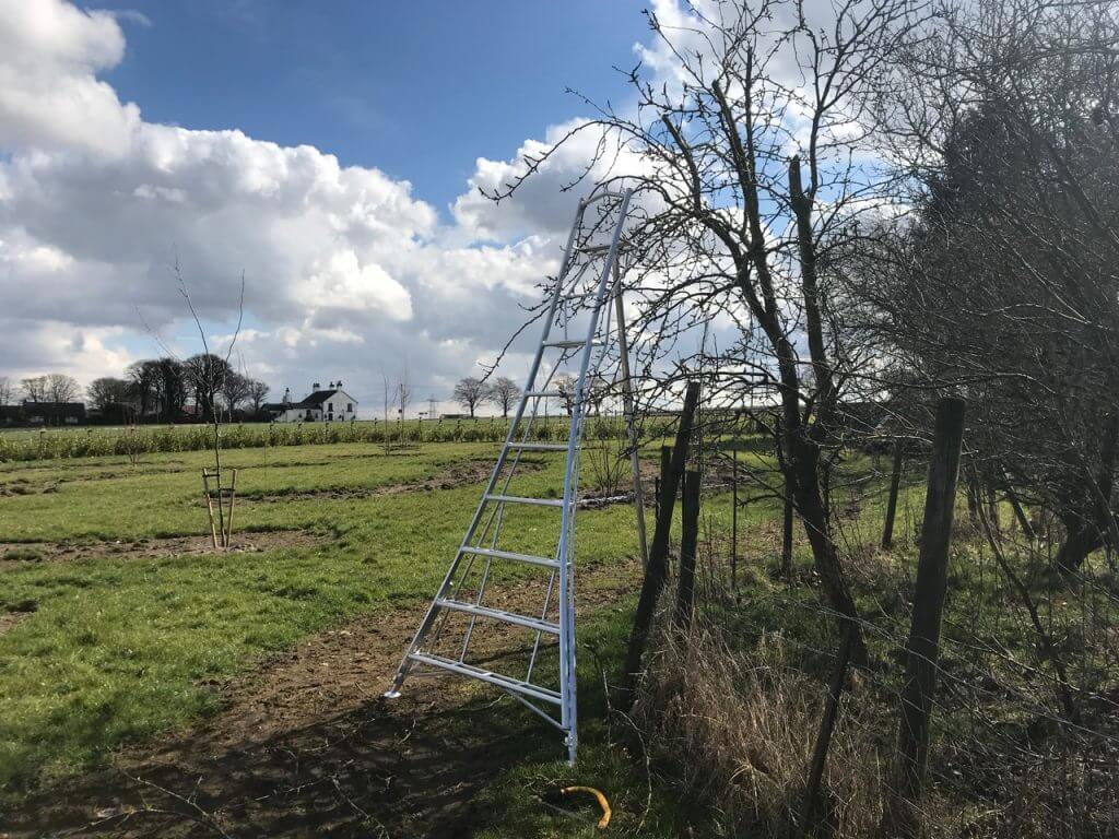 A set of Henchman ladders in a garden
