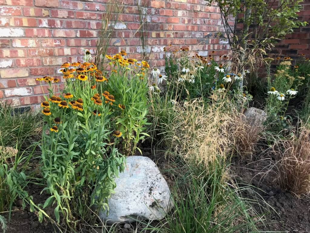 Hot herbaceous planting
