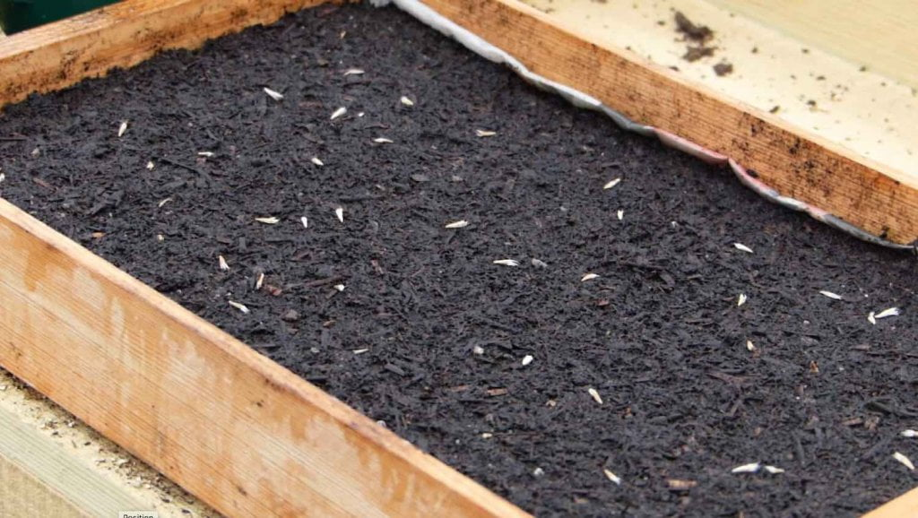 seed tray with seeds on