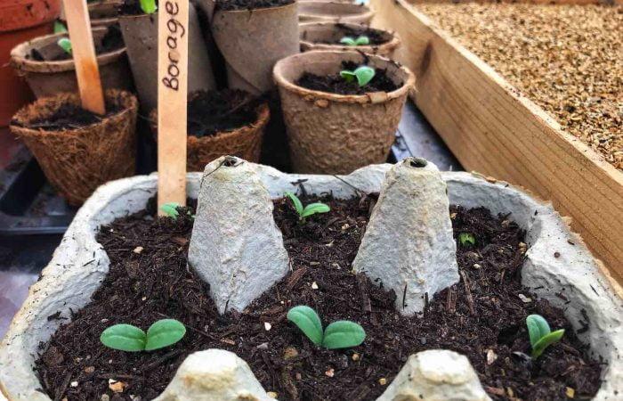 Garden Ninjas plastic free garden seedlings