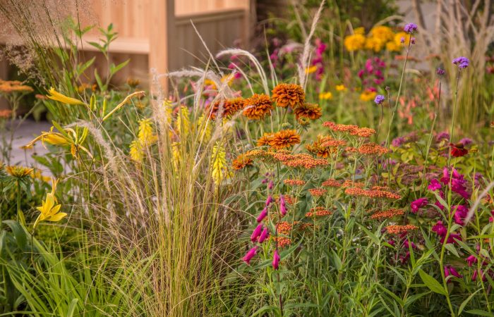 Prairie planting of hot border colours