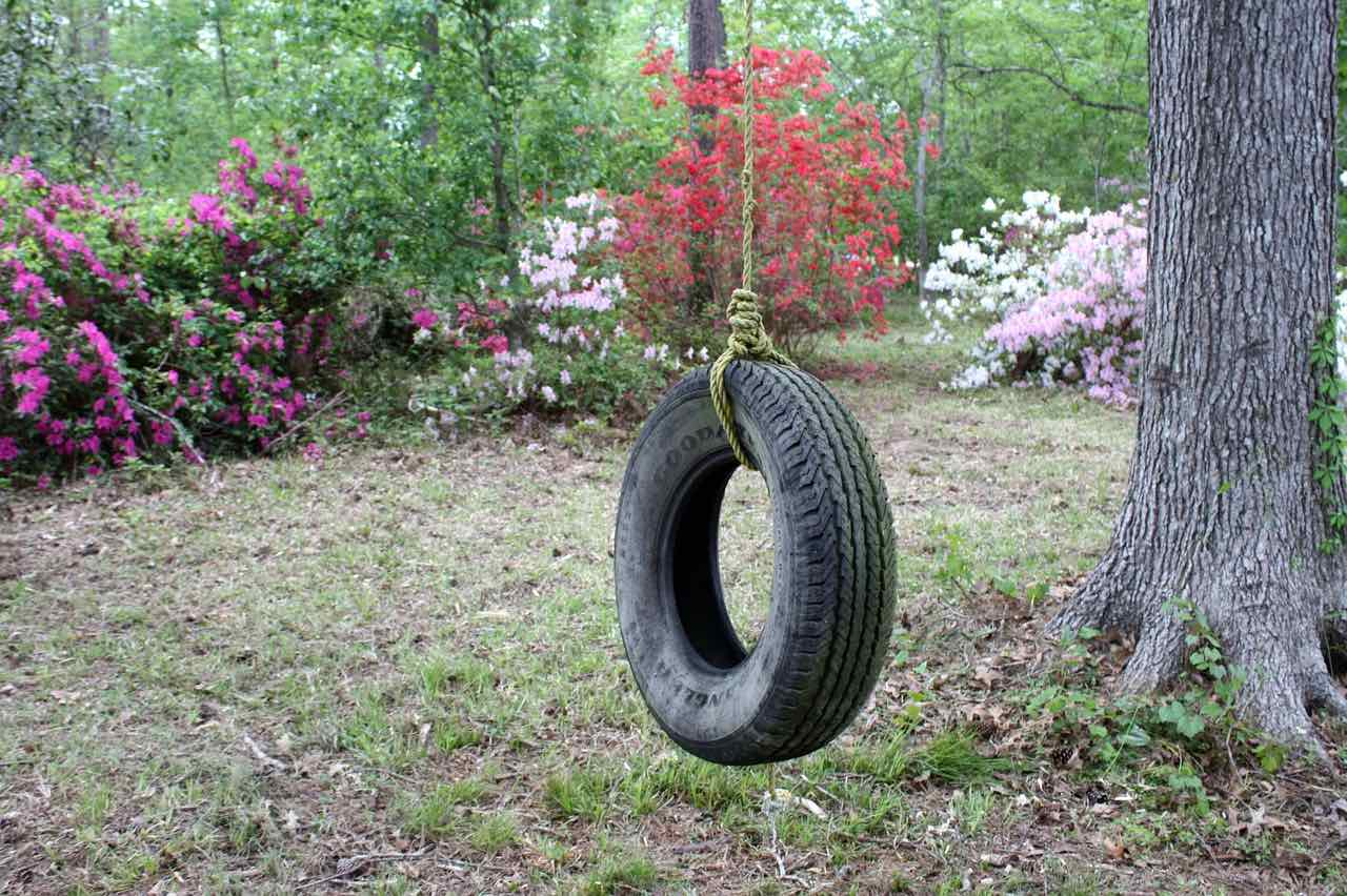 A tyre hanging from a tree