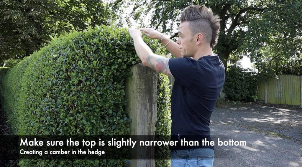 How to trim a hedge camber