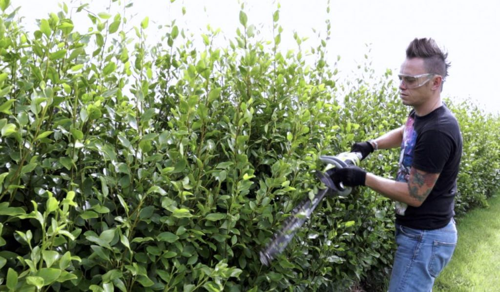Garden Ninja trimming a hedge in a wand action