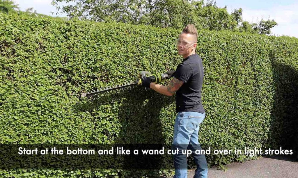 Garden Ninja showing how to trim a hedge