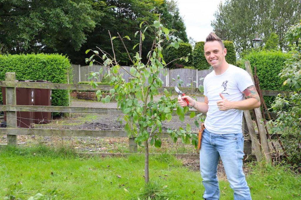 Garden Ninja pruning a plum tree in summer