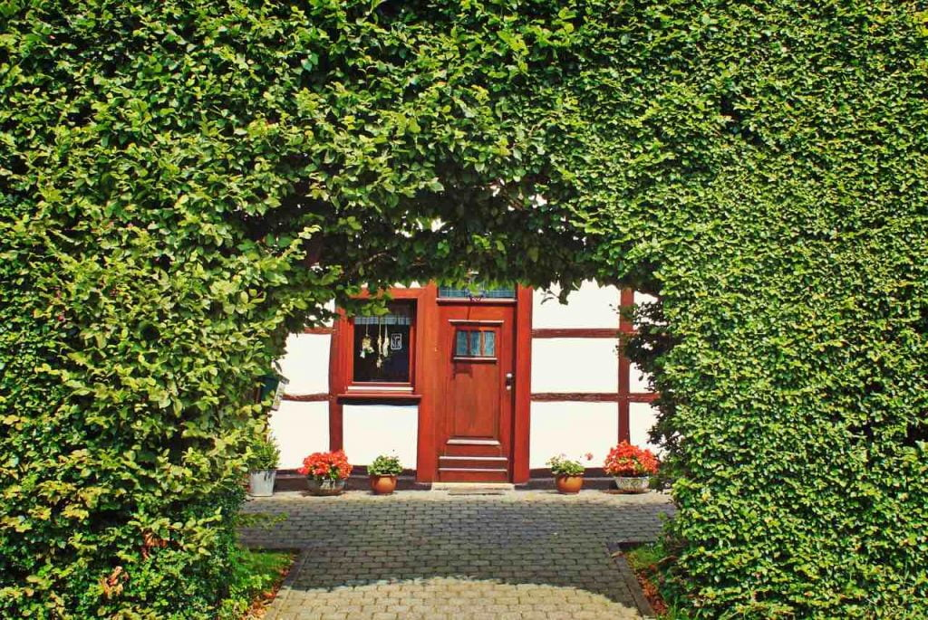 A green hedge with a red door though the middle