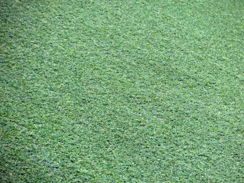 Green artificial turf