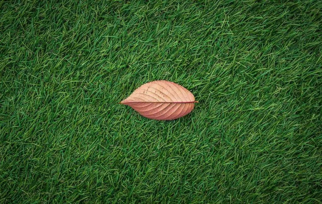 A leaf sitting on top of artifical turf