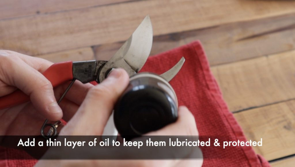 Oiling sharpened secateurs