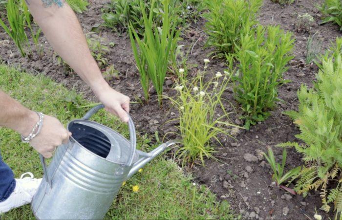Garden Ninja spot watering plants