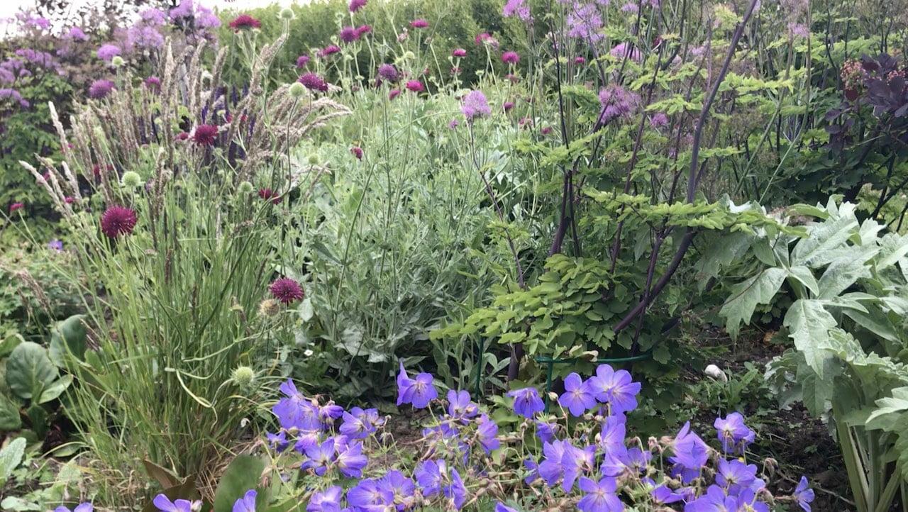 How to plant a flower bed: 11 Top Design Tips - Garden Ninja Ltd