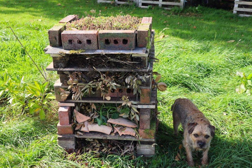 Garden ninja dog barry with his bug hotel