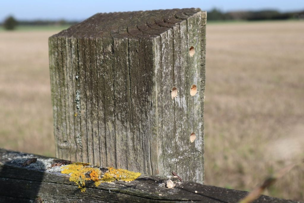A bee hotel in a fence post