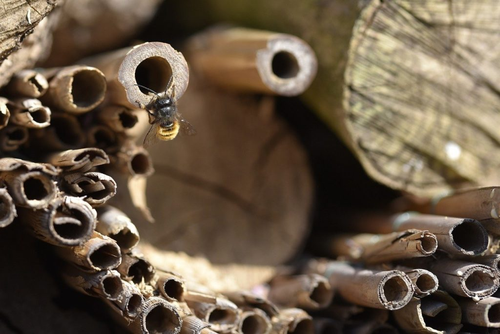 a solitary bee hotel with canes