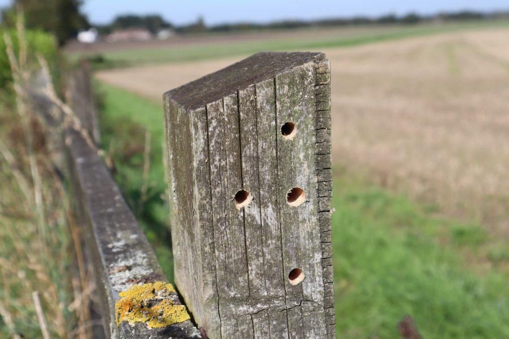 A home made solitary bee hotel