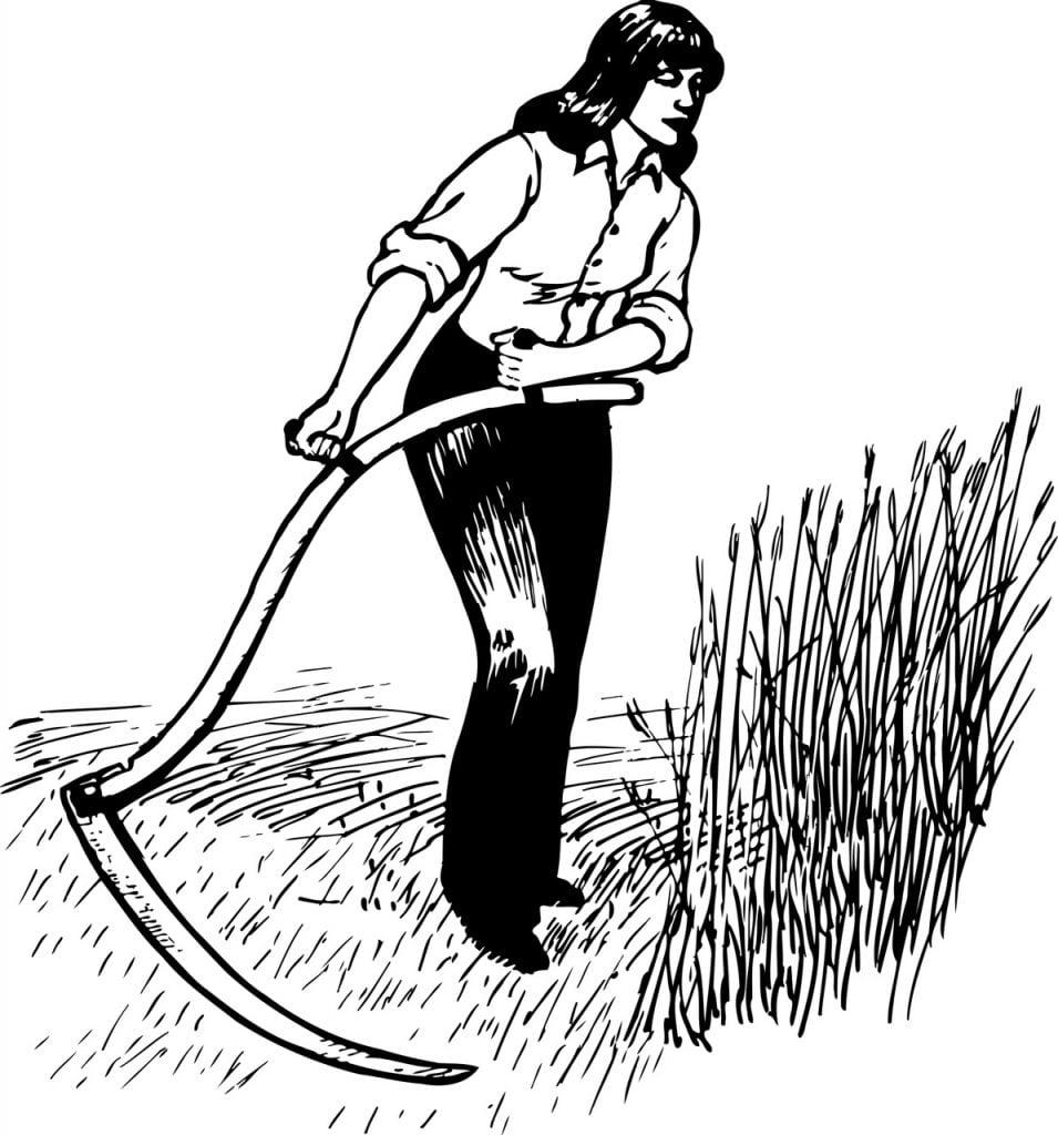 Scything a meadow