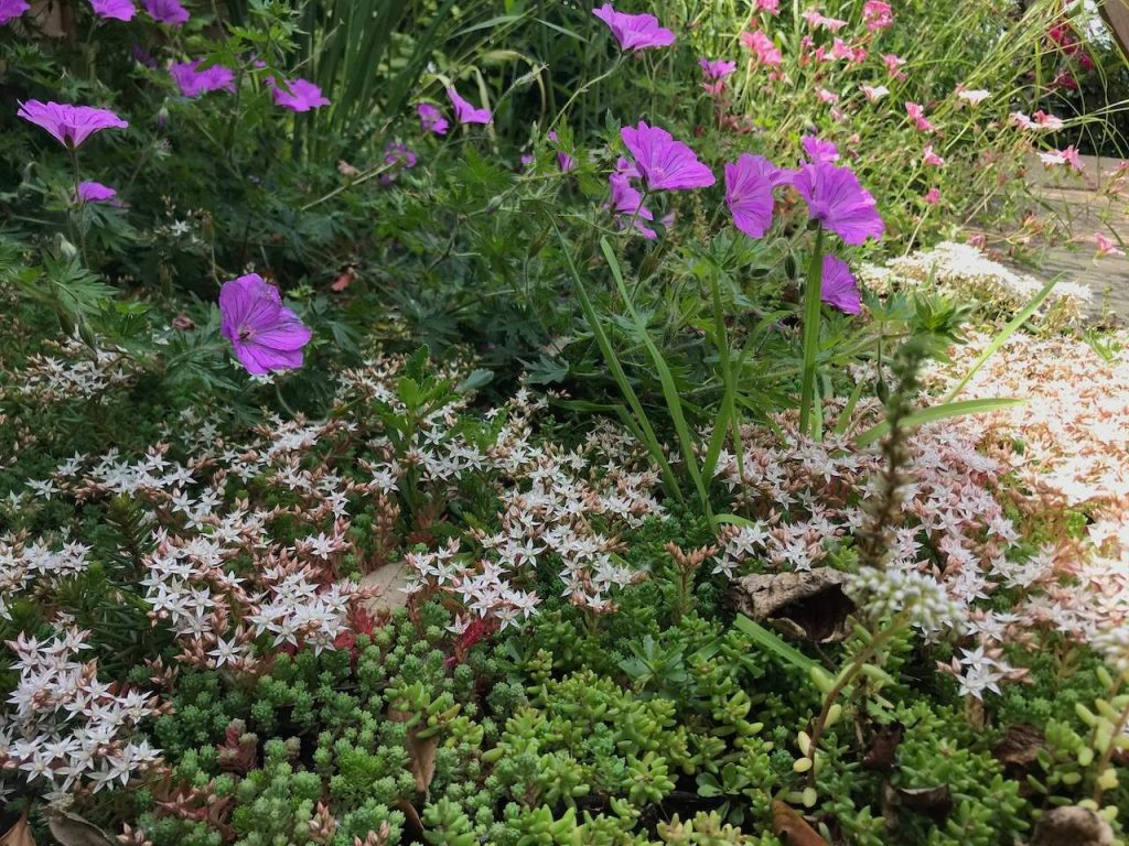 A flower bed of herbaceous perennials